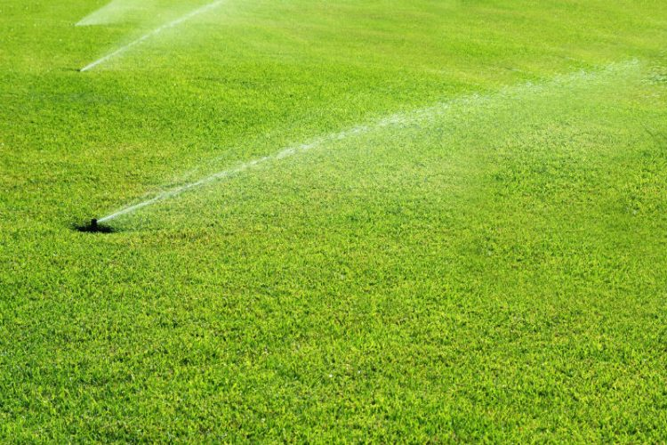 How to fix an over-fertilized lawn