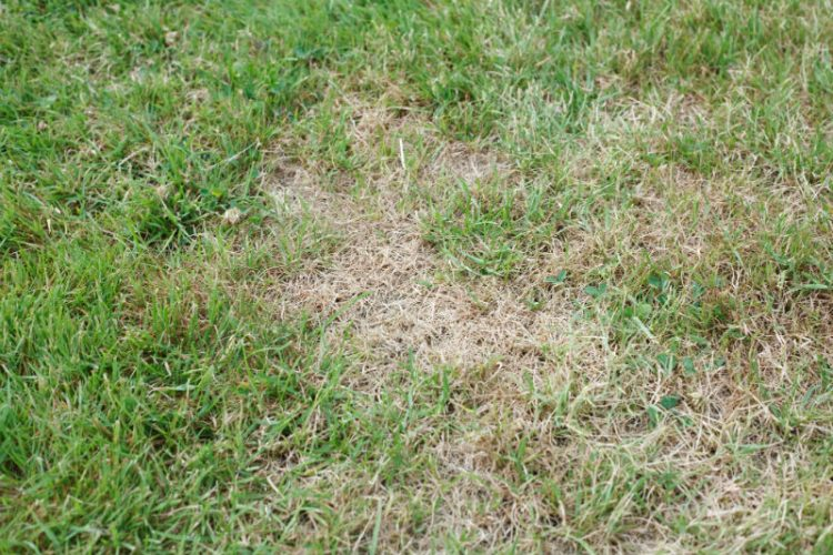 How to fix brown patches in your lawn